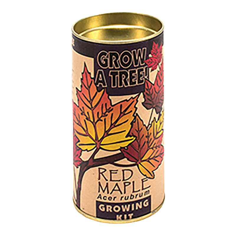 Red Maple Tree Growing Kit,GKRM